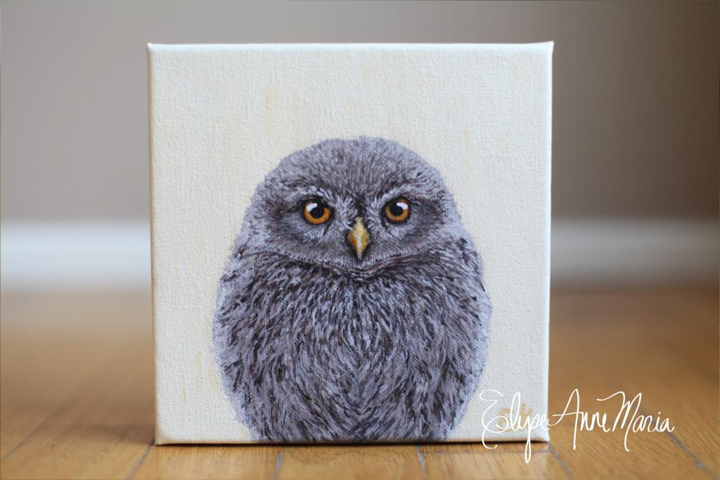 Owl7-2